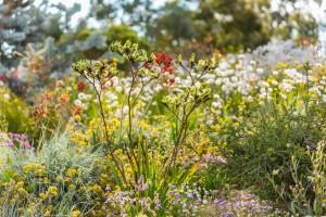 Wildflower Wonders High Tea