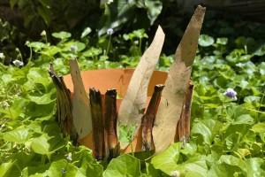 Balga Crowns and Nature Chains