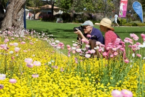 Couple taking wildflower photos