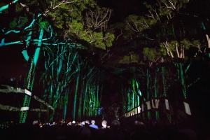 Underwater scenes were projected onto the majestic Lemon-scented Gums along Fraser Avenue. Photo: J. Thomas.