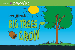 From Little Seeds Big Trees Grow