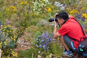 Wildflower photography in Kings Park