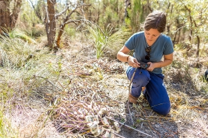 Kings Park SPhd student Anthea conducting research in Kings Park bushland.  Photo: J. Thomas