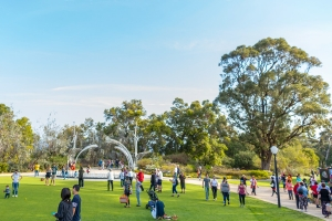 More than five million visitors flocked to Kings Park this year. Image: J. Thomas.