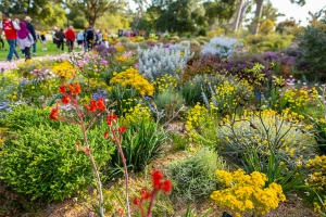 Kings Park Festival is a celebration of WA wildflowers. Photo: J. Thomas.