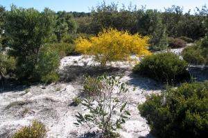Banksia Woodland site