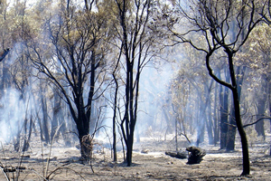Fire management in an Australian landscape