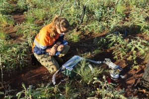 Taking soil respiration measurements under a Eucalyptus tree in the Pilbara. Photo: D. Martini.
